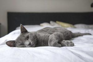 котка на легло
